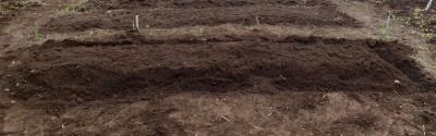 家庭農園 畝作り